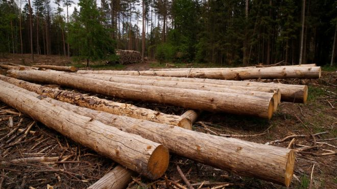 Bialowieza Forest: Poland sued over ancient woods logging