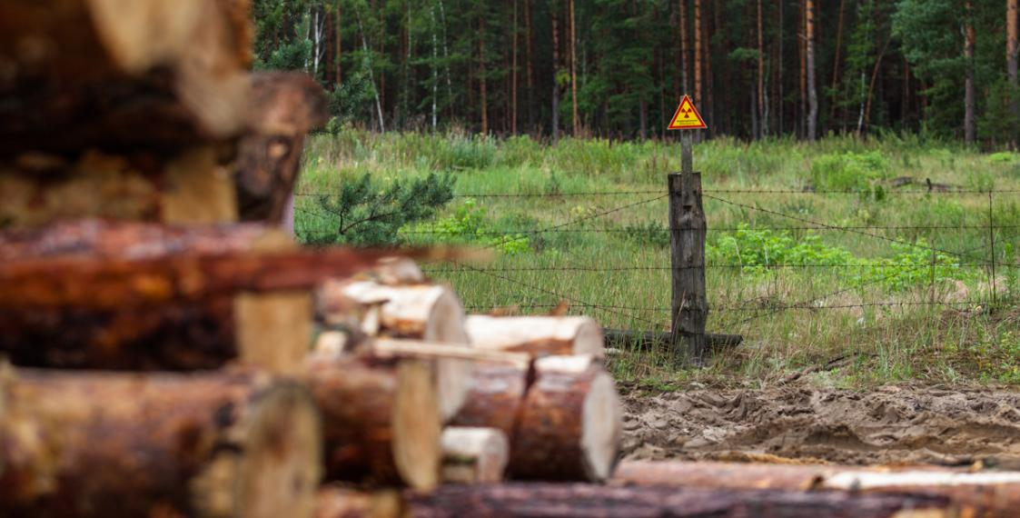 How radioactive wood from Belarus is sold across the world