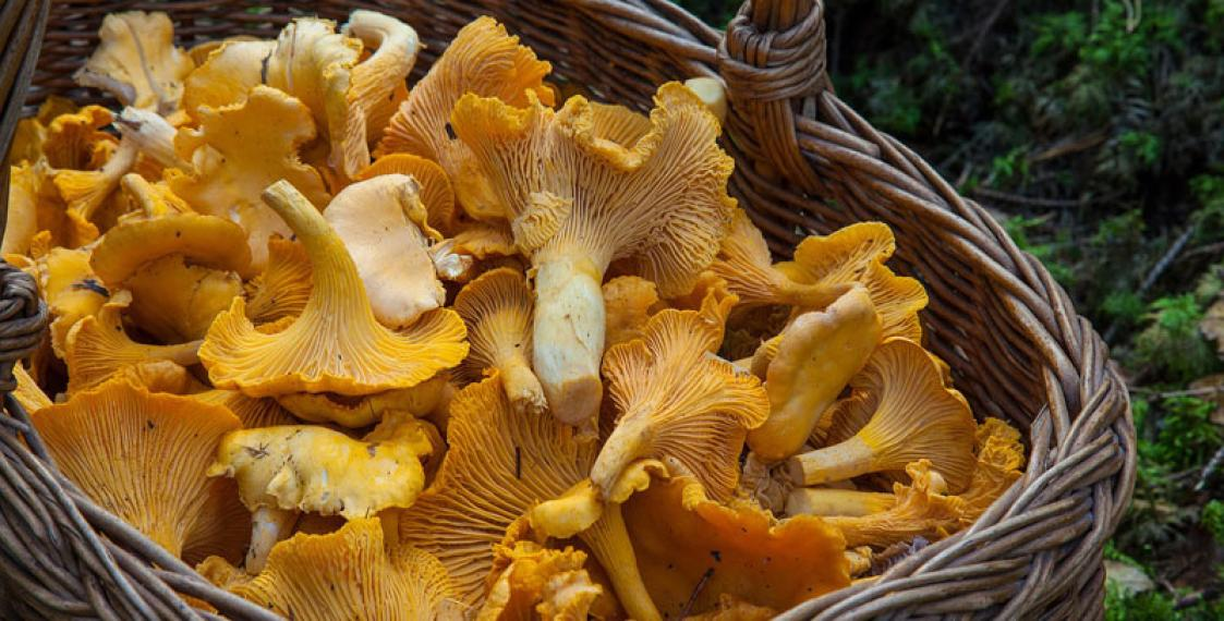 Reuters: Radioactive Belarusian mushrooms found in France