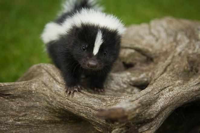 Эти фото растрогают любого: самые милые детеныши животных