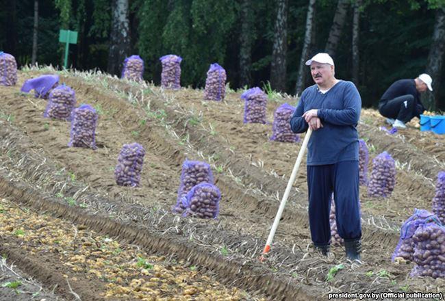 Почему сельское хозяйство в Беларуси четверть века остается убыточным