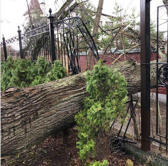 Галкин и Пугачева серьезно пострадали от урагана