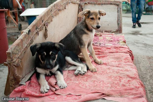 Animal cruelty in Belarus