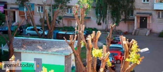 Комбайны вместо берёз: в Гомеле при подготовке к выставке вырубили деревья