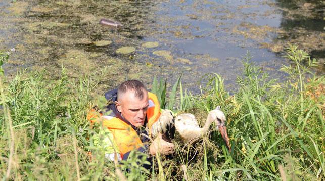 В Ляховичах спасатели вытащили из реки трех аистят