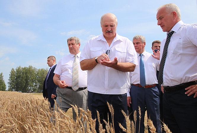 За что Лукашенко снова зол на Россию?