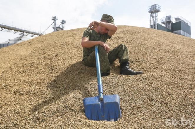 Военнослужащие помогают на уборке урожая - фотофакт