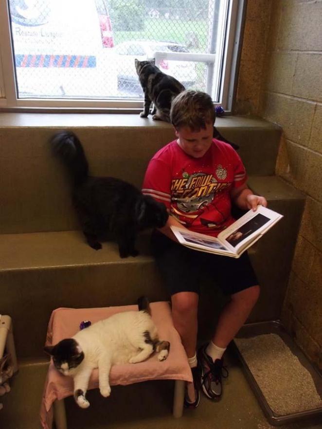 Как кошки помогают детям развить навыки чтения