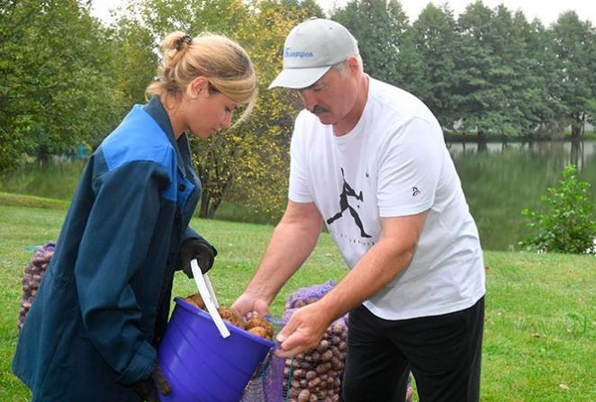 Лукашенко в окружении красавиц собирал арбузы