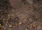 Шокирующие подробности убийства под Лиозно: жертву закопали еще живой