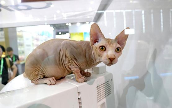 как умирают кошки от коронавируса